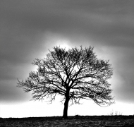 Dark Sky Tree